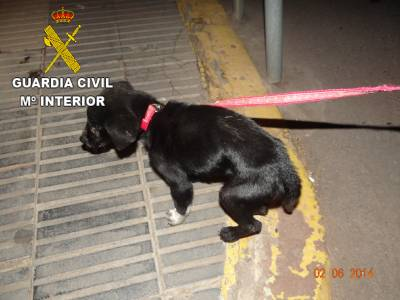 La Guardia Civil ha imputado a una persona por maltrato animal en Nules
